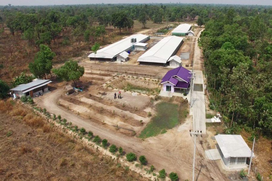 ปกรณ์ฟาร์ม คอนแทรคฟาร์มหมู อาชีพที่ไร้ความเสี่ยง