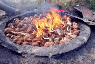 เผาทำลายมะพร้าวอินโดนีเซียลักลอบนำเข้า