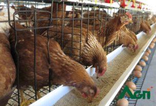 กรมปศุสัตว์ เดินหน้าโครงการรักษาเสถียรภาพราคาไข่ไก่ให้ยั่งยืนอย่างต่อเนื่อง